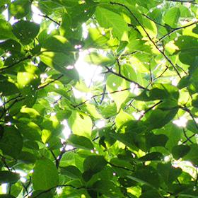 緑地環境システム